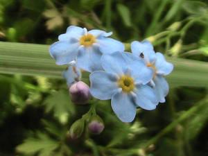 Rapsody in blue