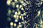 Bokeh spider web by Artistic1234