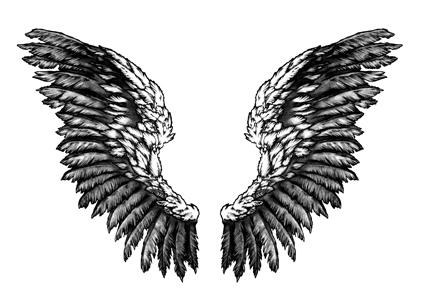 Wings by romaxa11