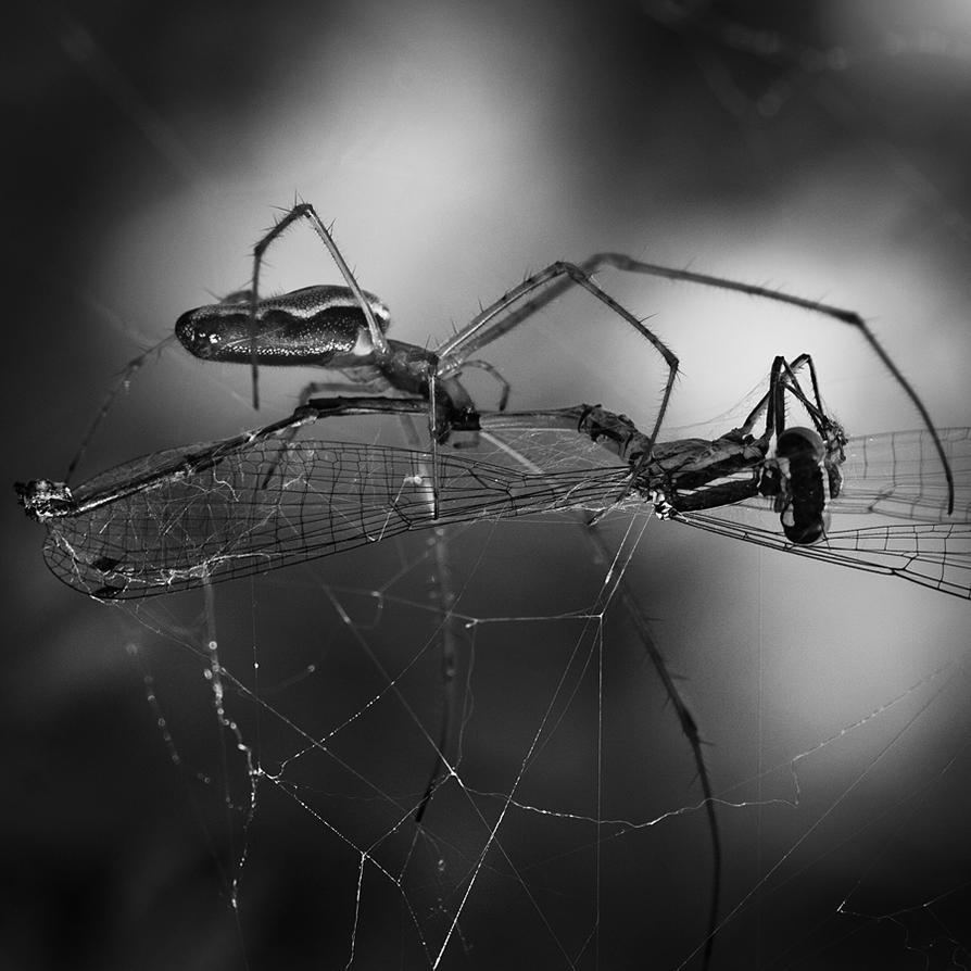 L'enfer noir... by Herculanum