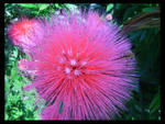 pink punk flower...