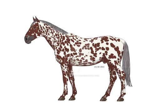 Knabstrupper Horse Phaustino