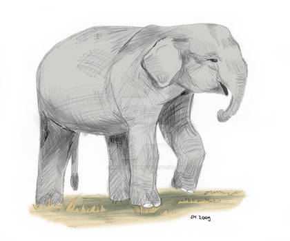 003 Elefantenbaby 2009