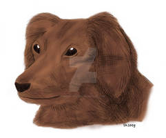016 Hund 2009