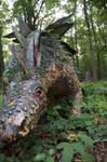 abandoned prehistoric forest