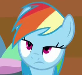 Dashie is not amused...