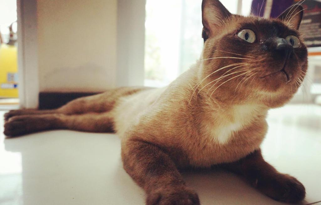 Cat01 by pueng2311