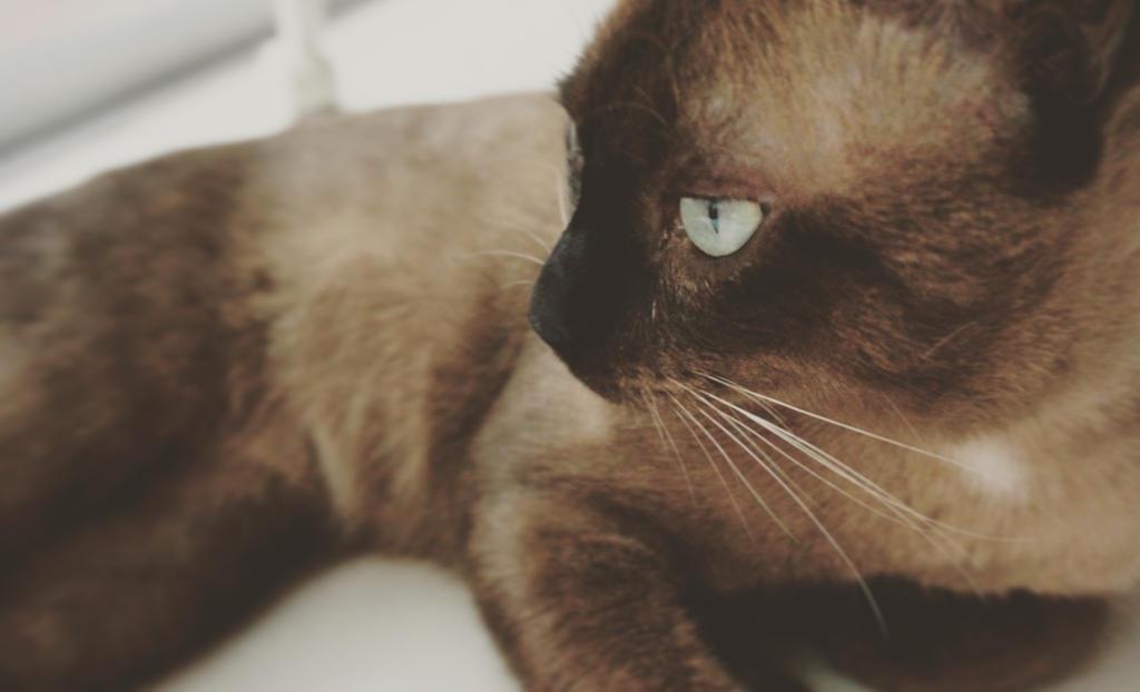 Cat02 by pueng2311