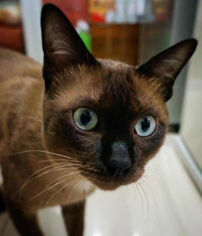 Cat04 by pueng2311
