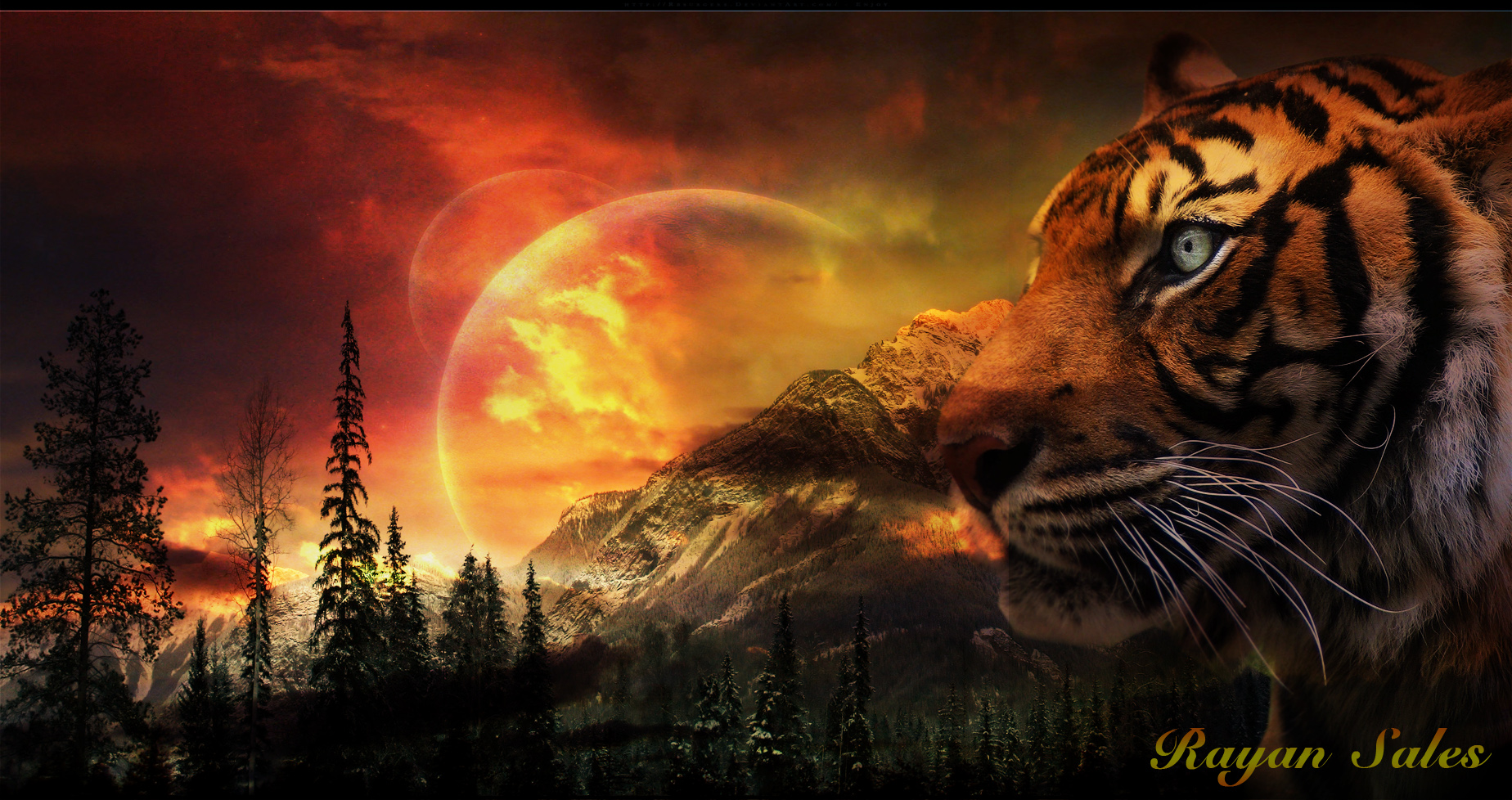 Tiger Wallpaper by rayansales