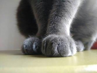 Cat Paws - British Cat