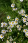 Preetyy Flowers