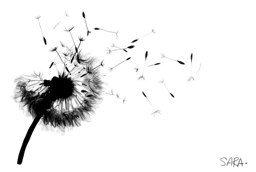 Dandelion by Saigleri