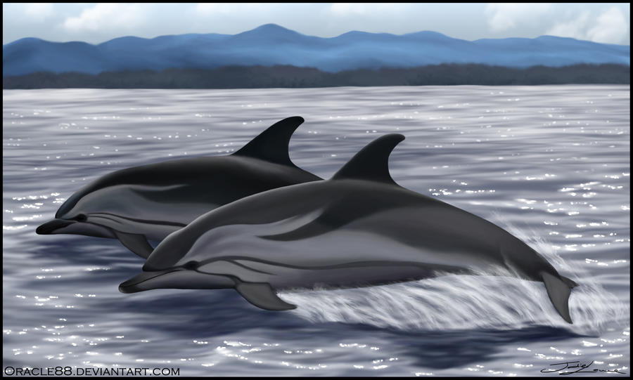Striped dolphin Striped | Volvoab