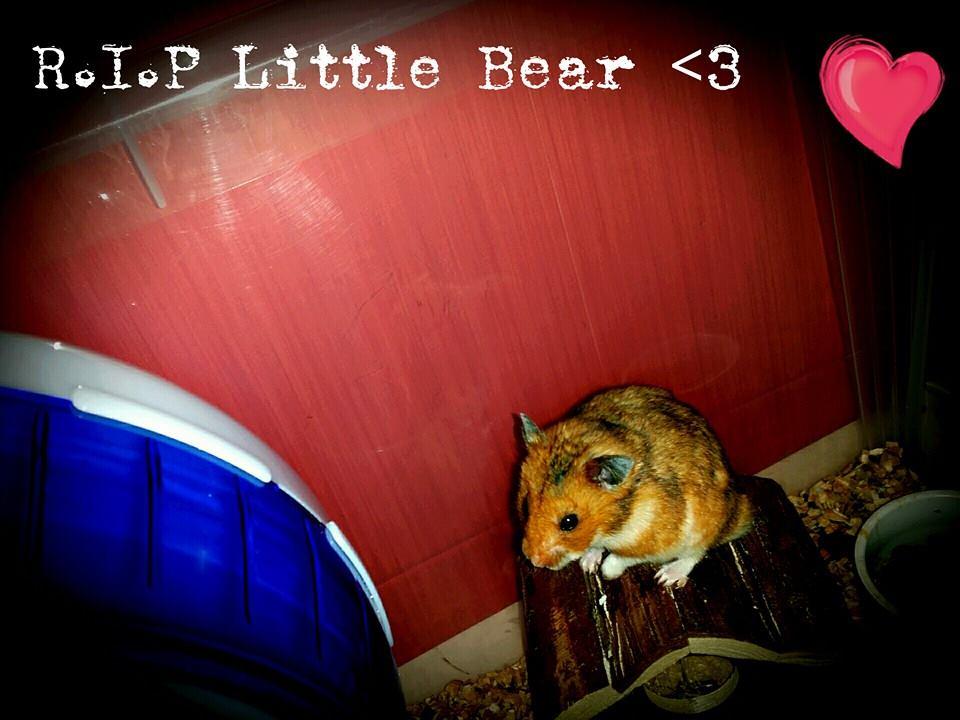R.I.P Little Bear by Ranchan120
