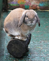 Rabbit and Log by SnowPoring