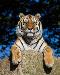 Tiger Rock by SnowPoring