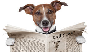 Sedia Newspaper Dog by AuroraMisa