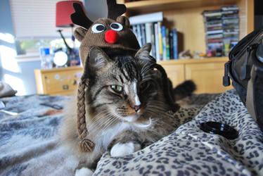 Reindeer Nova by Subastral