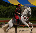 Andalusian Stallion - 24