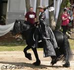 Fell Pony - 2