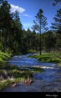 Creek Through the Forest by ElaineSeleneStock