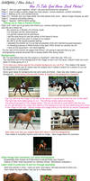 How-To Horse Stock Photo - 3