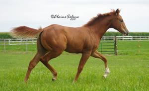 Foal - 6 by ElaineSeleneStock