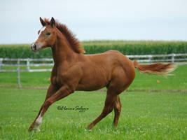 Foal - 15 by ElaineSeleneStock