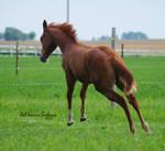 Foal - 21