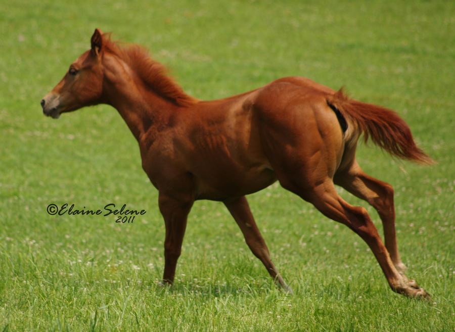 Foal - 28 by ElaineSeleneStock