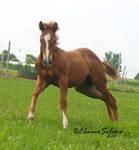 Foal - 34