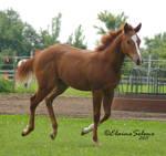 Foal - 37