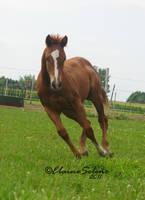 Foal - 43 by ElaineSeleneStock
