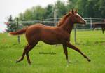 Foal - 45