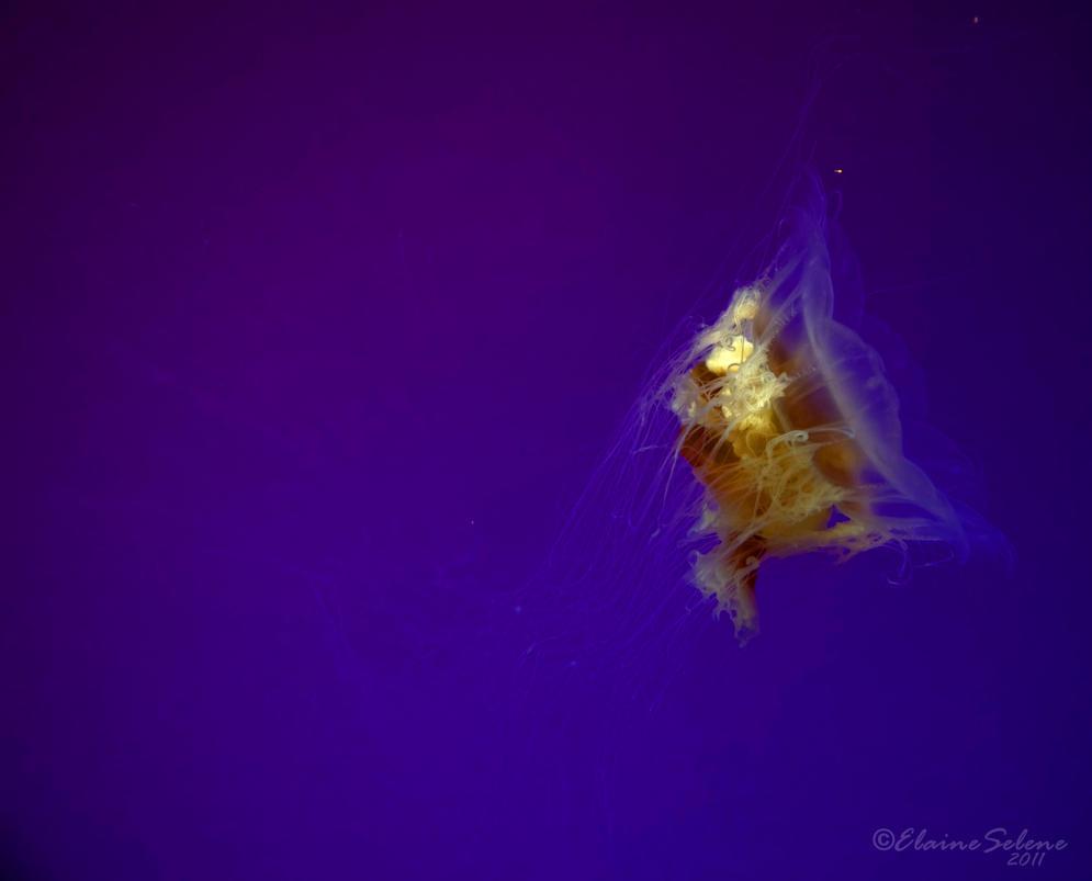 Jellies - 49 by ElaineSeleneStock