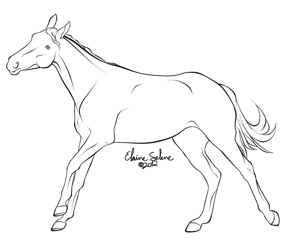Print Wild Animal Coloring Pages | freecoloring4u.com