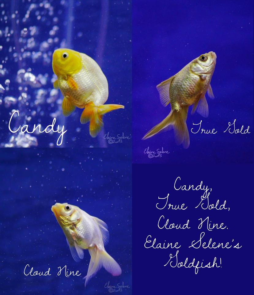 elaine_selenes_goldfish_by_elaineselenes