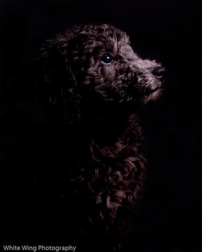 JessicaDouglas's Profile Picture