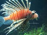 Fishy Fishy Fish by EinaSelesnia