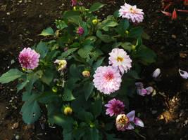 Flower Stock 04