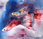 Fish by DeepBlueEyesz