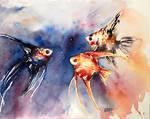 Angel fish by DeepBlueEyesz