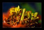 rainforest on a flower