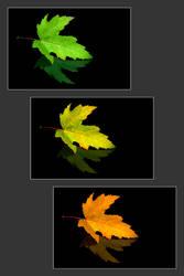 Es ist Herbst by selester