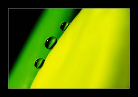 Jamaica by selester