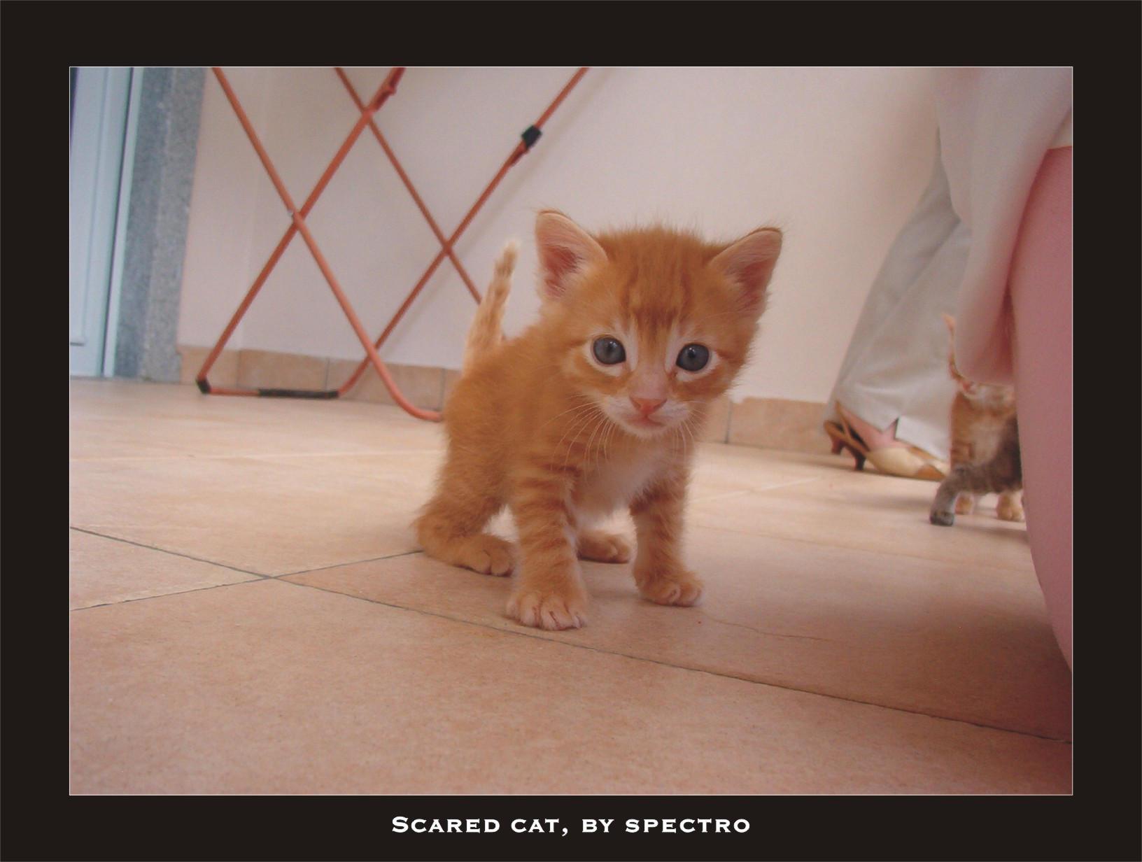 world of warcraft crazy cat lady