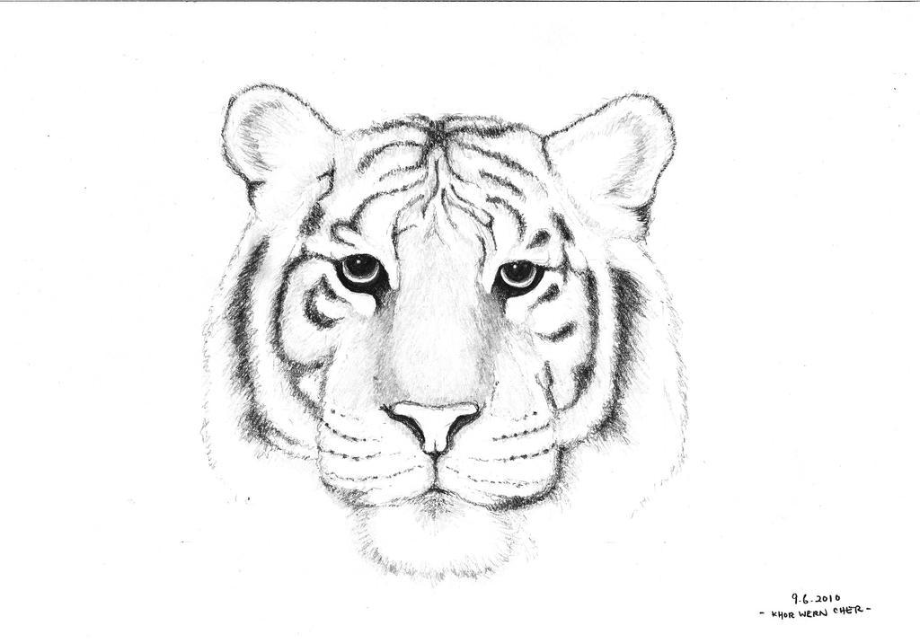 White Tiger by Bacafreak on DeviantArt