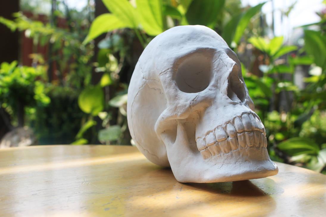 Paperclay Skull