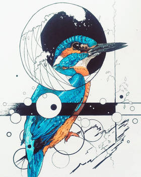 Kingfisher by SnWhy